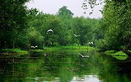 杭州西溪国家湿地公园一日游